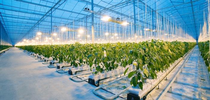 Lampade led per l'agricoltura